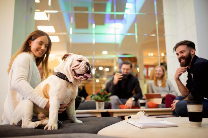 Triple-check carrier pet approaches