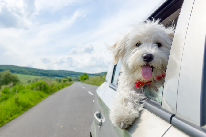How to Travel with Dog in the Car